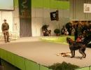 Messe 17.01. bis 20.01.2013 »Jagen und Fischen« Augsburg