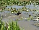 Wasser- / Schleppenübungstag 27.07.2013 Inzlham