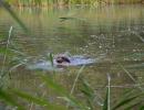 Wasser- / Schleppenübungstag 28.07.2012 Isen