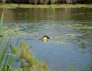 Wasserübungstag 09.08.2014 Parkstetten